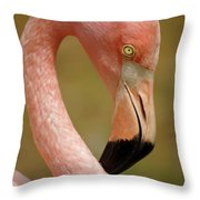 Flamingo Head Throw Pillow by Carlos Caetano