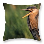 Fledgling Great Blue Heron Throw Pillow by Natural Selection Bill Byrne