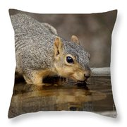Fox Squirrel Throw Pillow by Lori Tordsen