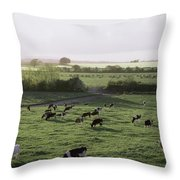 Friesian Bullocks, Ireland Herd Of Throw Pillow by The Irish Image Collection