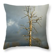 Ghost Tree Throw Pillow by Douglas Barnett