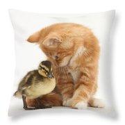 Ginger Kitten And Mallard Duckling Throw Pillow by Mark Taylor