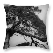 Gnarly Cedar Tree Throw Pillow by Teresa Mucha
