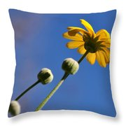 Golden Daisy On Blue Throw Pillow by Kaye Menner