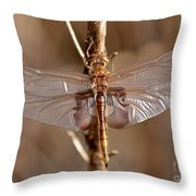 Golden Dragonfly Wings Throw Pillow by Carol Groenen