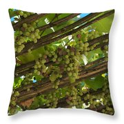 Grapes Grow On Vines Draped Throw Pillow by Heather Perry