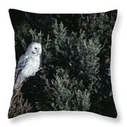 Great Gray Owl Strix Nebulosa In Blonde Throw Pillow by Michael Quinton