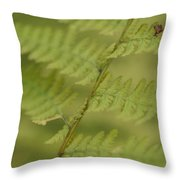 Green Ferns Blend Together Throw Pillow by Heather Perry