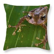 Ground Frog Nakanai Mts Papua New Guinea Throw Pillow by Piotr Naskrecki