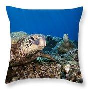 Hawaiian Turtle On Pacific Reef Throw Pillow by Dave Fleetham