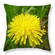 Honey Bee Full Of Pollen Throw Pillow by Renee Trenholm