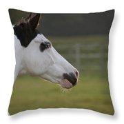 horse portrait Throw Pillow by Ralf Kaiser
