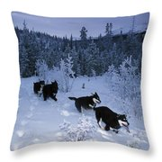 Huskie Pups Out For A Run In The Snow Throw Pillow by Paul Nicklen