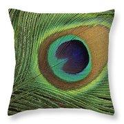 Indian Peafowl Pavo Cristatus Display Throw Pillow by Gerry Ellis