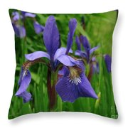 Irises Throw Pillow by Randi Shenkman