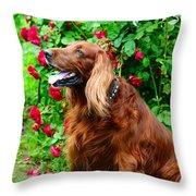 Irish Setter II Throw Pillow by Jenny Rainbow