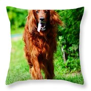 Irish Setter V Throw Pillow by Jenny Rainbow