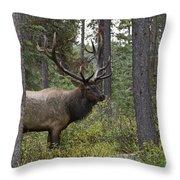 Jasper National Park, Jasper, Alberta Throw Pillow by Philippe Widling