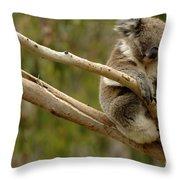 Koala At Work Throw Pillow by Bob Christopher