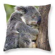 Koala Phascolarctos Cinereus Sleeping Throw Pillow by Pete Oxford