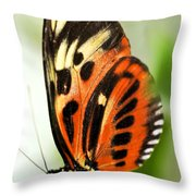 Large Tiger Butterfly Throw Pillow by Elena Elisseeva