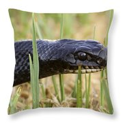 Large Whipsnake Coluber Jugularis Throw Pillow by Alon Meir