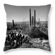 Late Winter Desert Throw Pillow by Chad Dutson