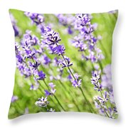 Lavender In Sunshine Throw Pillow by Elena Elisseeva