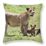 Lioness With Cubs Throw Pillow by Carson Ganci