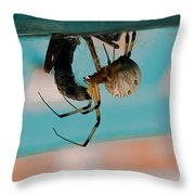 Little Miss Venom Throw Pillow by DigiArt Diaries by Vicky B Fuller