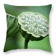 Lotus Seed Pods Throw Pillow by Sabrina L Ryan
