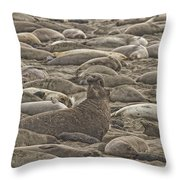 Male Elephant Seal Barking Amidst Throw Pillow by Robert Postma