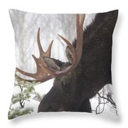 Male Moose Grazing In Winter, Gaspesie Throw Pillow by Philippe Henry