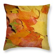 Maple Rainbow Throw Pillow by Ausra Paulauskaite