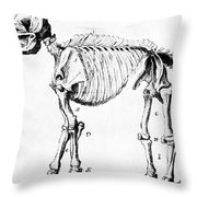 Mastodon Skeleton Drawing Throw Pillow by Science Source