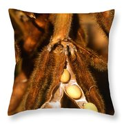 Mature Soybeans Throw Pillow by Science Source