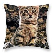 mediterranean wild babe cat Throw Pillow by Stylianos Kleanthous