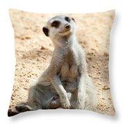 Meerkat Throw Pillow by Fabrizio Troiani