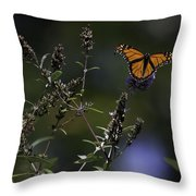 Monarch in Morning Light Throw Pillow by Rob Travis