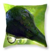 Morning Dew Figs Throw Pillow by Karen Wiles
