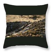 Mussels Sunset Throw Pillow by Henrik Lehnerer