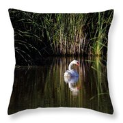 Mute Swan Throw Pillow by Jim Nelson