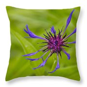Mystery Wildflower 1 Throw Pillow by Sean Griffin