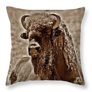 Napping Bison Throw Pillow by Monica Wheelus