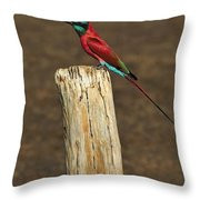 Northern Carmine Bee-eater Throw Pillow by Tony Beck