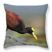 Northern Jacana Foraging Costa Rica Throw Pillow by Tim Fitzharris
