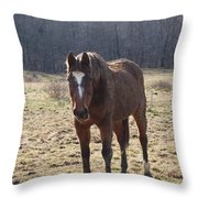 One Funny Horse Throw Pillow by Robert Margetts