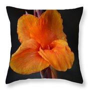 Orange Canna Lily Throw Pillow by Melanie Moraga