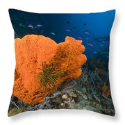 Orange Sponge With Crinoid Attached Throw Pillow by Steve Jones