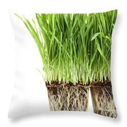 Organic Wheat Grass On White Throw Pillow by Sandra Cunningham